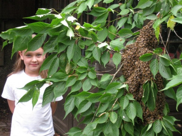 Maddie and the bees